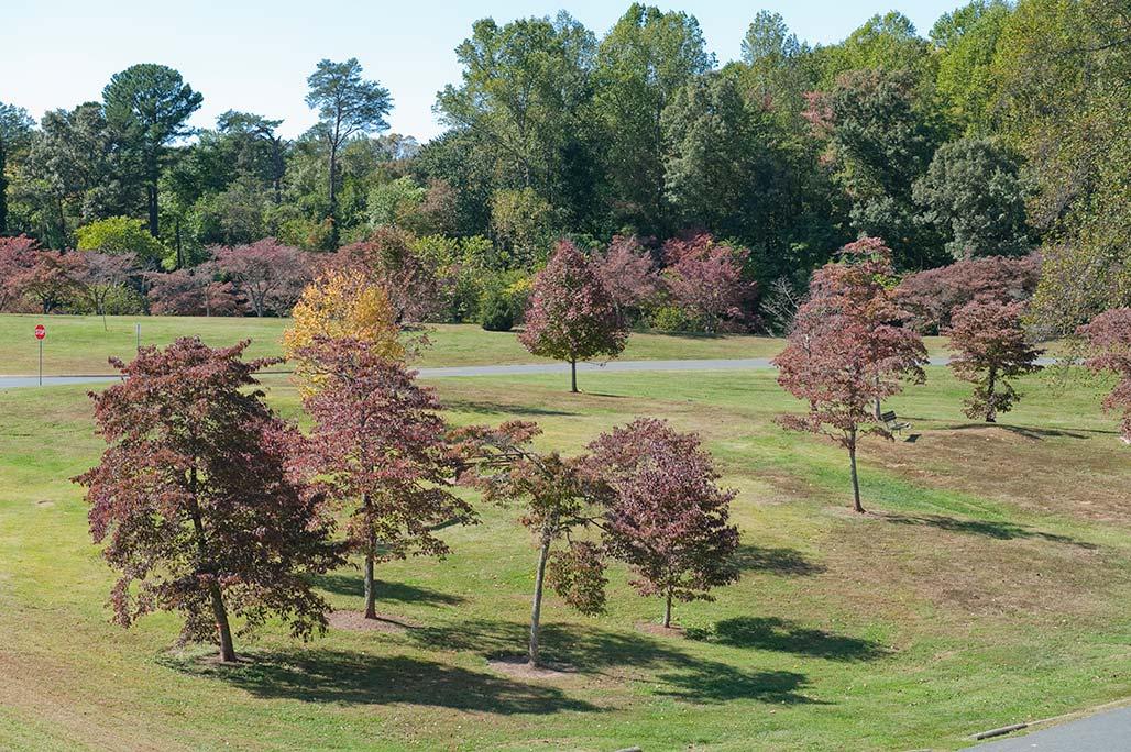 McIntire Park
